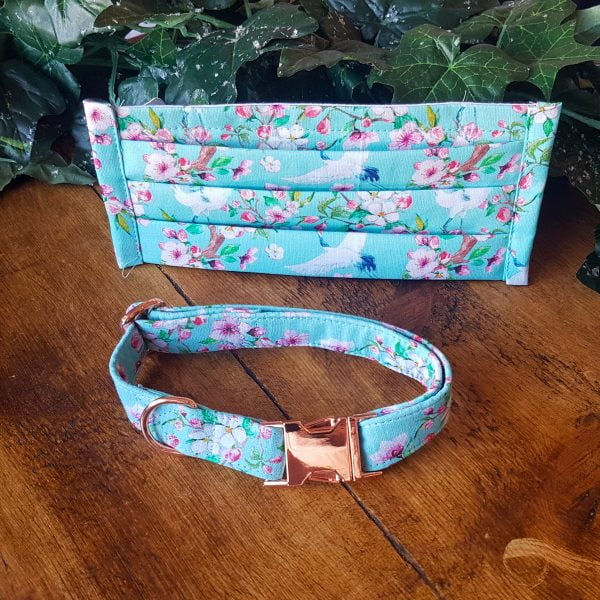 turquoise floral dog collar